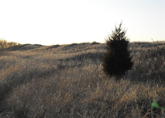 Grass Greeting Card featuring the photograph Alone Two by D Steven Brito