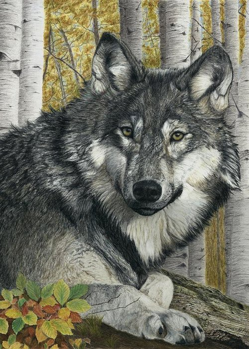 Wolf Greeting Card featuring the painting Alpha Male by Marlene Piccolin