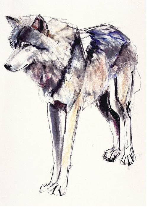 Husky Drawings Greeting Cards
