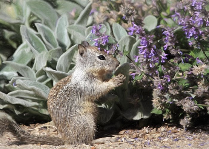Squirrel Greeting Card featuring the photograph Always Say Grace by Donna Kennedy