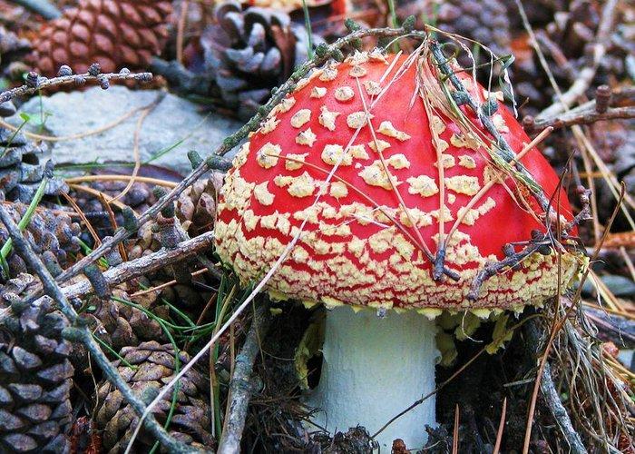 Amanita Mushroom Greeting Card featuring the photograph Amanita Mushroom by Michele Penner