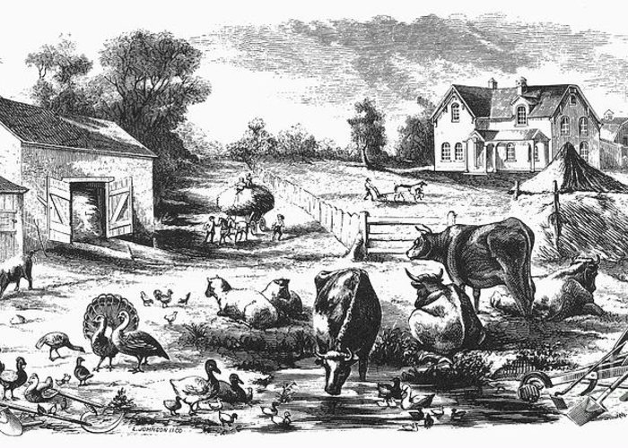1870 Greeting Card featuring the photograph American Farmyard, C1870 by Granger