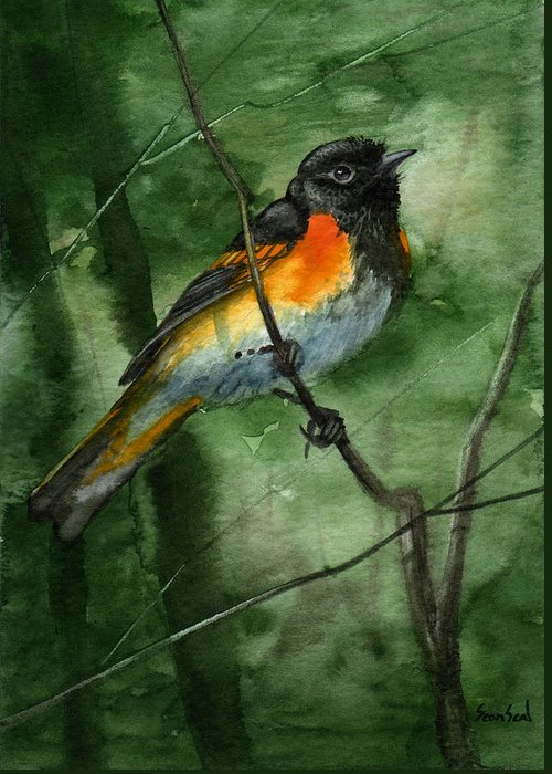 Birds Greeting Card featuring the painting American Redstart by Sean Seal