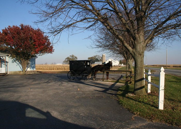 Horse Greeting Card featuring the photograph Amish 4 by Eric Irion