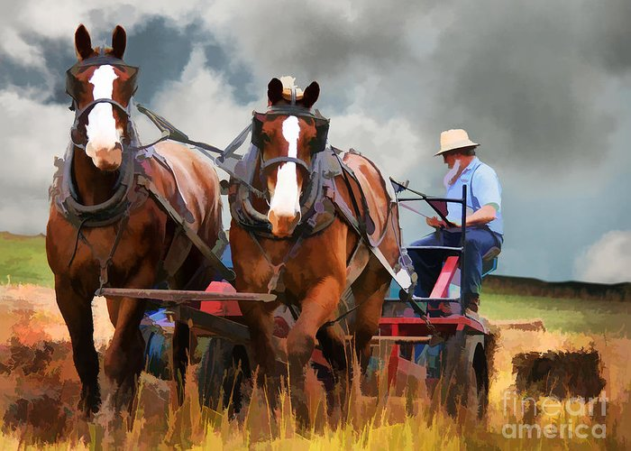 Amish Greeting Card featuring the photograph Amish Farmer by Tom Griffithe