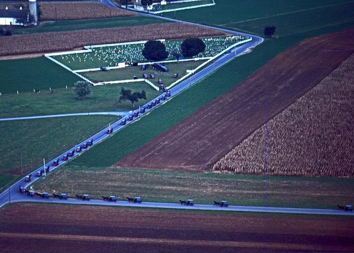 Amish Buggies Greeting Card featuring the photograph Amish Funeral Buggie Procession Aerial by Blair Seitz