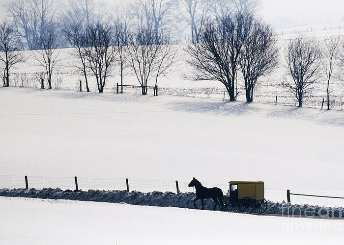 Amish Greeting Card featuring the photograph Amish Horse And Buggy In Snowy Landscape by Jeremy Woodhouse