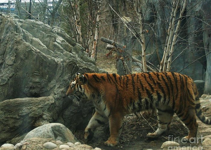 Tiger Greeting Card featuring the photograph Amur Tiger by Dawn Downour