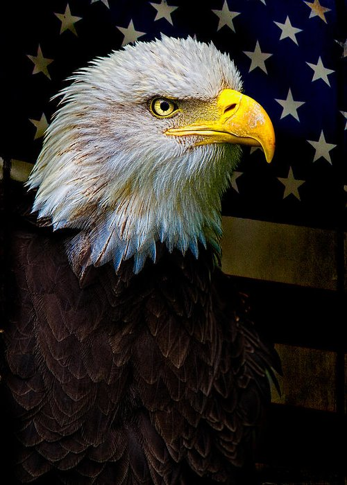 Eagle Greeting Card featuring the photograph An American Icon by Chris Lord