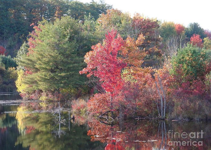 Autum Leaves Greeting Card featuring the photograph An Autum Day by Robyn Leakey