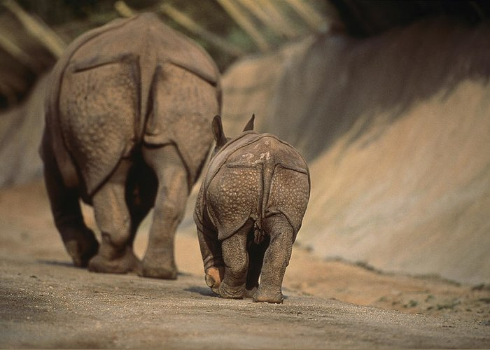 san Diego Wild Animal Park Greeting Card featuring the photograph An Indian Rhinoceros And Her Baby by Michael Nichols