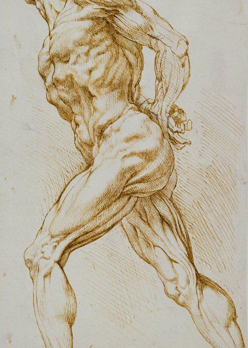 Rubens Greeting Card featuring the drawing Anatomical Study by Rubens
