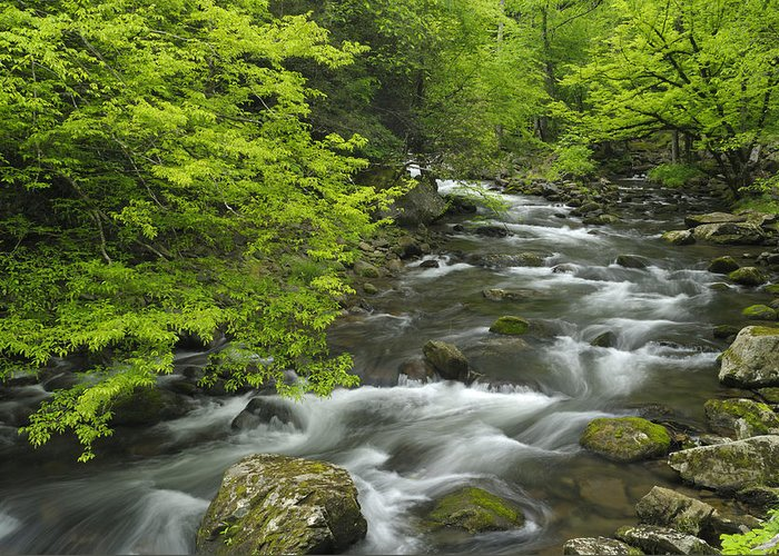 River Greeting Card featuring the photograph Ancient Cascades In Great Smoky Mountains by Darrell Young