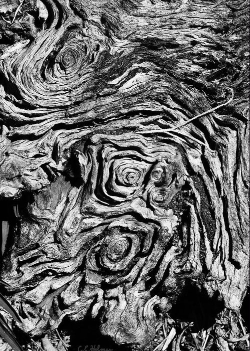 Tree Greeting Card featuring the photograph Ancient Stump by Christopher Holmes