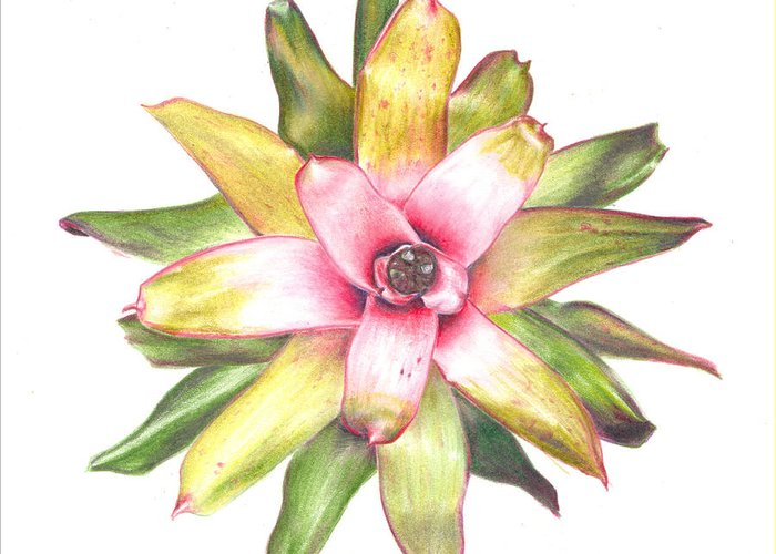 Bromeliad Greeting Card featuring the painting Andrea's Choice by Penrith Goff