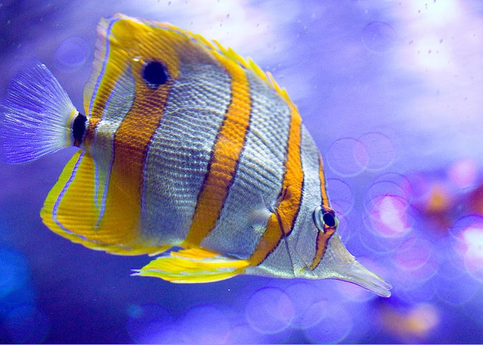 Fish Greeting Card featuring the photograph Angel Fish by Carl Jackson
