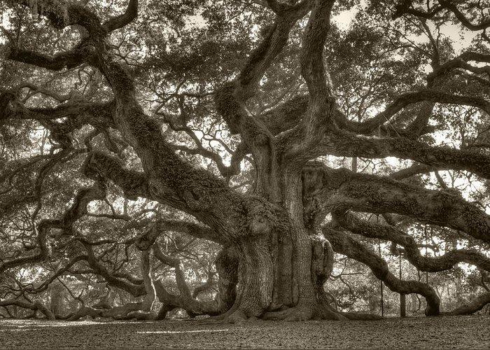 Angel Oak Greeting Card featuring the photograph Angel Oak Live Oak Tree by Dustin K Ryan