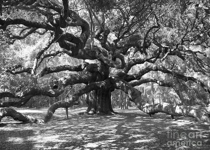 Black And White Greeting Card featuring the photograph Angel Oak Tree Black And White by Melanie Snipes