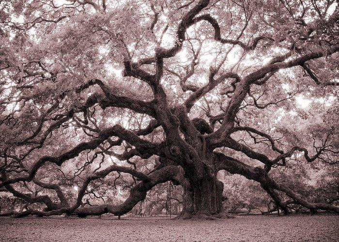 Angel Oak Greeting Card featuring the photograph Angel Oak Tree by Dustin K Ryan