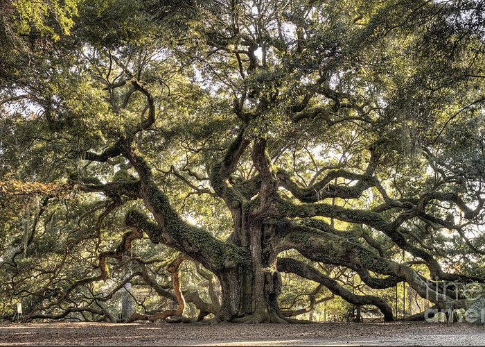 Angel Oak Tree Greeting Card featuring the photograph Angel Oak Tree Live Oak by Dustin K Ryan