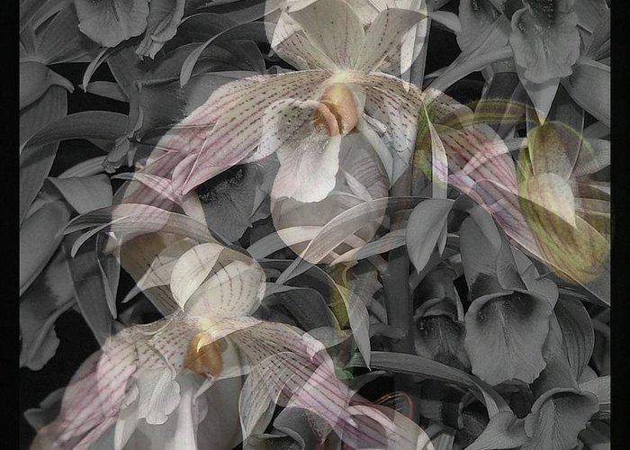 Orchid Greeting Card featuring the photograph Angelic Hosts The Hooded Nun Orchid by Mindy Newman