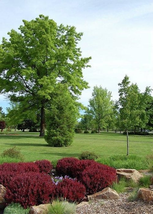 Parks Greeting Card featuring the photograph Ann Morrison Park by Tanya Mutton