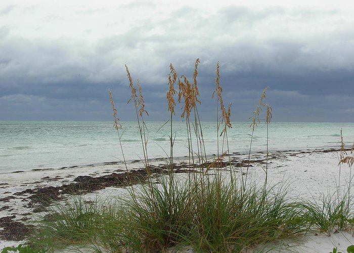 Photography Greeting Card featuring the photograph Anna Maria Island by Amanda Vouglas