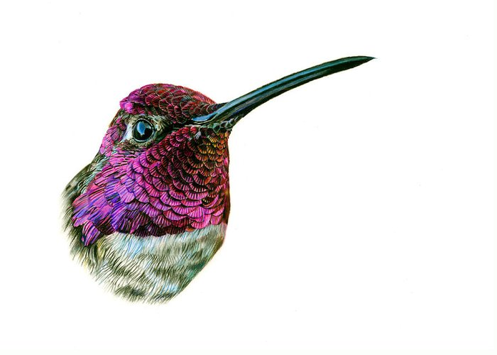 Anna's Hummingbird Greeting Card featuring the painting Anna's Hummingbird by Logan Parsons