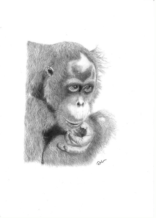 Animals Greeting Card featuring the drawing Annie by Rosanna Maria