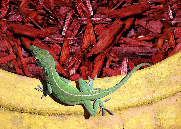 Nature Greeting Card featuring the photograph Anole Getting A Better Look by Lucyna A M Green