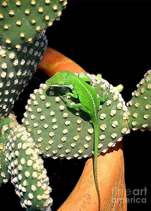 Nature Greeting Card featuring the photograph Anole Hanging Out With Cactus by Lucyna A M Green
