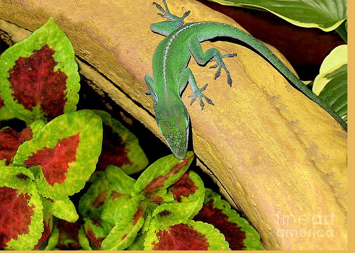 Nature Greeting Card featuring the photograph Anole Having A Drink by Lucyna A M Green