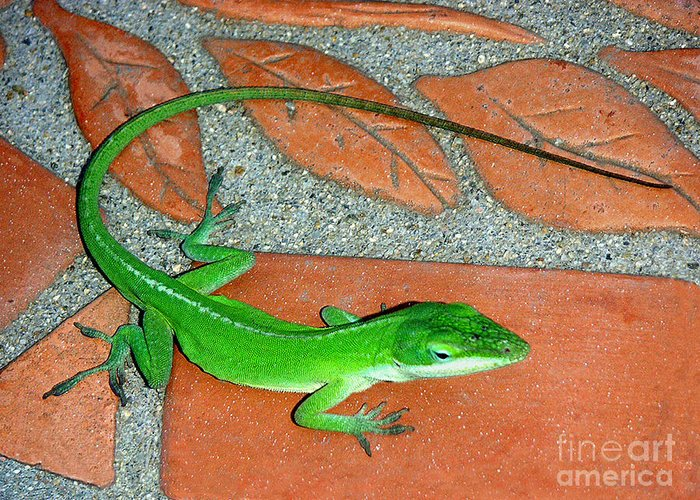 Nature Greeting Card featuring the photograph Anole On Chair Tiles by Lucyna A M Green
