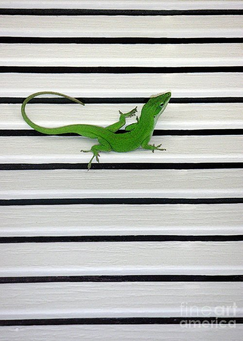 Nature Greeting Card featuring the photograph Anole Shuttered Out by Lucyna A M Green