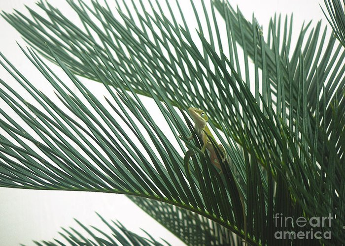 Nature Greeting Card featuring the photograph Anole With Palm - Entangled by Lucyna A M Green