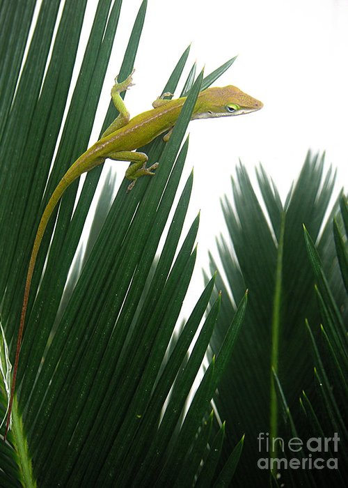 Nature Greeting Card featuring the photograph Anole With Palm - Flexible by Lucyna A M Green