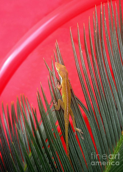 Nature Greeting Card featuring the photograph Anole With Palm - In The Red by Lucyna A M Green