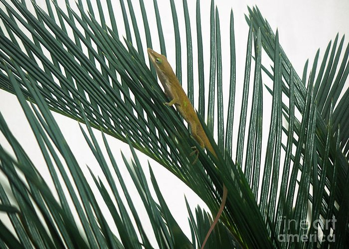 Nature Greeting Card featuring the photograph Anole With Palm - Looking Up by Lucyna A M Green