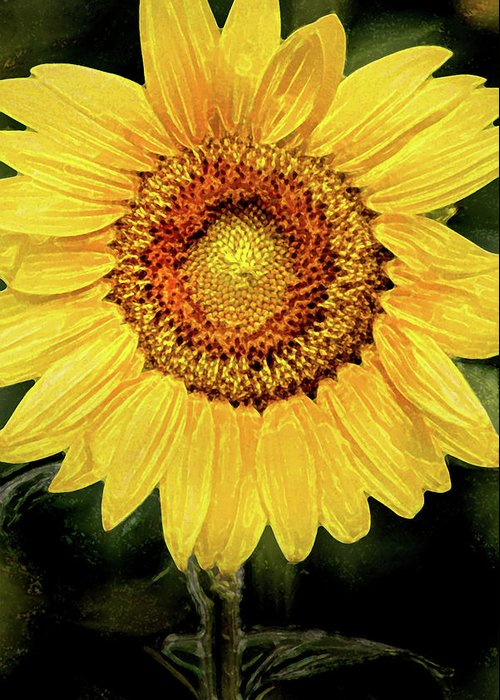 Sunflower Greeting Card featuring the photograph Another Artistic Sunflower by Don Johnson