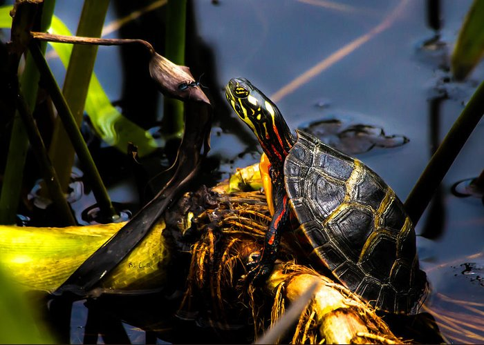 Turtles Greeting Card featuring the photograph Ant Meets Turtle by Bob Orsillo