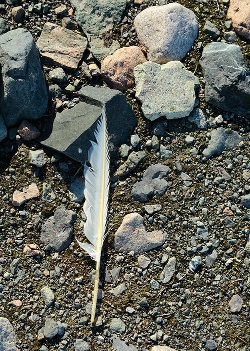 Feather Greeting Card featuring the photograph Antarctic Feather by Bruce J Robinson