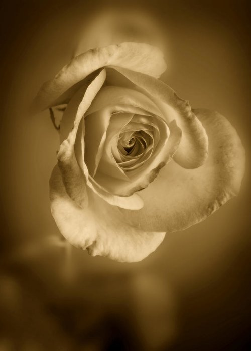 Rose Greeting Card featuring the photograph Antique Soft Rose by M K Miller
