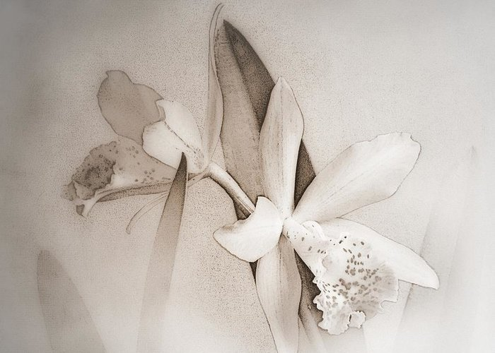 Antique Greeting Card featuring the photograph Antique White Orchids by Renee Trenholm