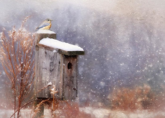 Bird Greeting Card featuring the photograph Apartment 25 by Lori Deiter