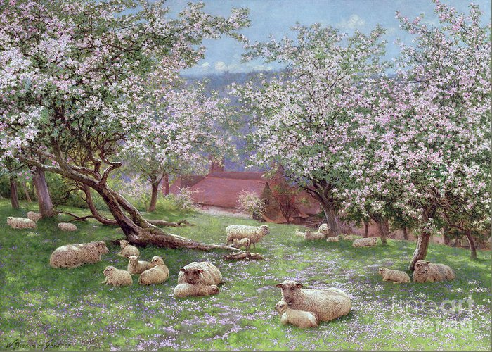 Appleblossom (w/c On Paper) By William Biscombe Gardner (1847-1919) Greeting Card featuring the painting Appleblossom by William Biscombe Gardner