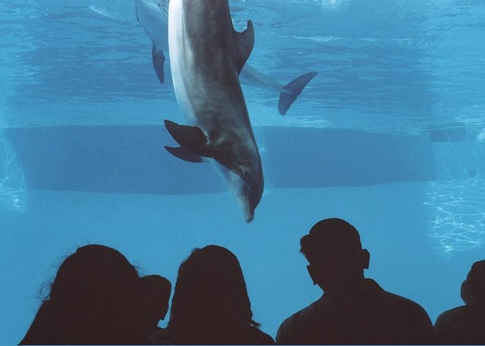 Dolphin Greeting Card featuring the photograph Aquarium Dolphin by Wendell Baggett