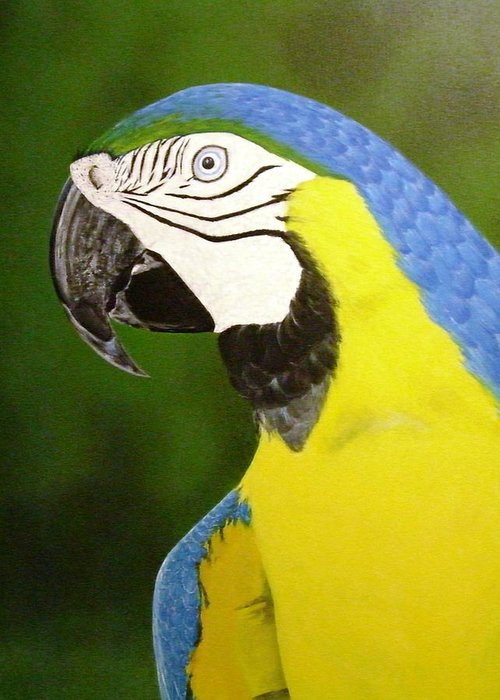 Bird Greeting Card featuring the painting Arara Azul by Flavia Lundgren