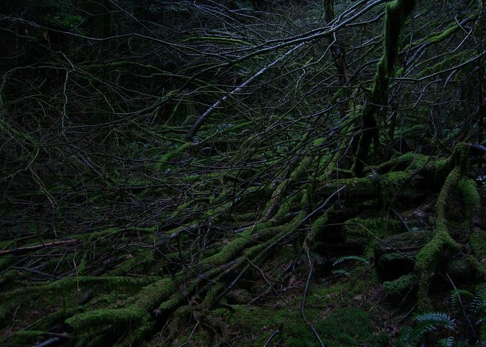 Arnor Greeting Card featuring the photograph Arboreal Forest by Jim Thomson
