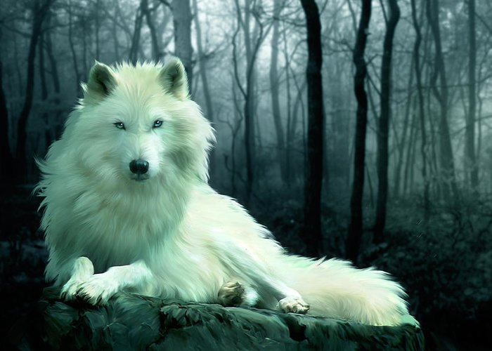 Arctic Wolf Images Greeting Cards