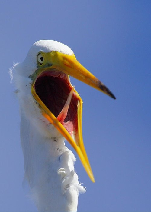 Great Egret Greeting Card featuring the photograph Are You Serious by Andrew McInnes